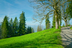 Nature background with green grass, trees and mountain country view Stock Photo