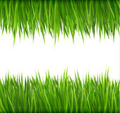 Nature background with green grass. Stock Images