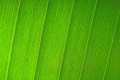 Nature Background of Green Leaf royalty free stock photos
