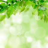 Nature background with green leaves Royalty Free Stock Photos