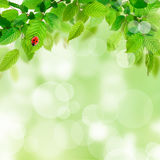 Nature background with green leaves Stock Photos