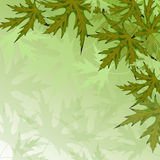 Nature background with green leaves . Nature background with green maple leaves . Vector illustration Stock Image