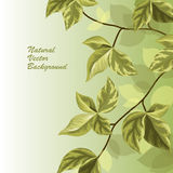 Nature background with green leaves . Spring brunch with leaves on green background. Vector illustration Stock Photo