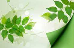 Nature background with green spring leaves. Vector illustration Royalty Free Stock Photography