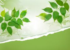 Nature background with green spring leaves Royalty Free Stock Image