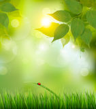 Nature background with green spring leaves. Vector illustration Stock Image