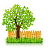 Nature background with green tree, grass and wooden fence vector Royalty Free Stock Image