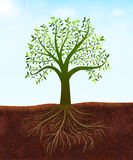 Nature background with green tree with leaves and roots vector.  stock illustration