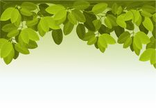 Nature background with ivy leaves Royalty Free Stock Photo