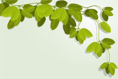 Nature background with ivy leaves Royalty Free Stock Image