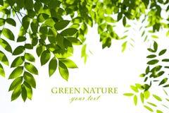 Nature background royalty free stock image