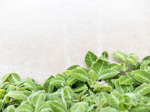 Nature background of leaves with white wall Royalty Free Stock Photo