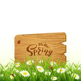 Lettering Hello Spring on wooden board and nature background wit. Nature background. Lettering Hello Spring on wooden board in grass with flowers, illustration Stock Image