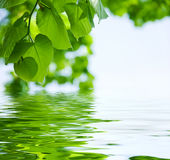 Nature background Royalty Free Stock Photography