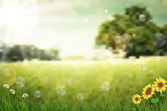 Nature  background in the morning Stock Photography