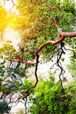 Nature background with mountain tree Stock Photos