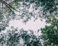 Forest. The nature background of pine forest up view stock images