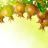 Nature background with pomegranate Stock Images