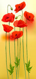 Nature background with red beauty poppies. Royalty Free Stock Image