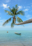 Nature background of sea with coconut palm tree Royalty Free Stock Image