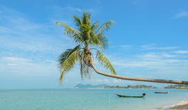 Nature background of sea with coconut palm tree Royalty Free Stock Photos