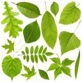 Nature background. Set Stock Image