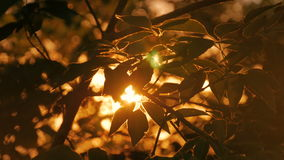 Nature background with silhouette of foliage stock footage