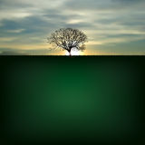 Nature background with silhouette of tree Royalty Free Stock Photography