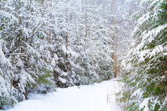Nature background with snowy road in forest Stock Photography