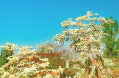 Nature background with some green trees and white petals. On a clear blue sky Stock Photography