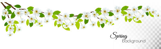 Nature background with spring blossom of cherry Royalty Free Stock Photos