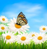 Nature background with spring daisy flower and but Stock Photo