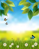 Nature vertical background with spring or summer scene. Nature vertical background. Spring or summer scene with green grass and leaves, flowers, butterflies royalty free illustration