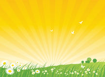Nature Background - Summer stock illustration