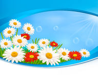 Nature background with summer colorful flowers Royalty Free Stock Images