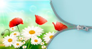 Nature background with summer flowers Stock Images