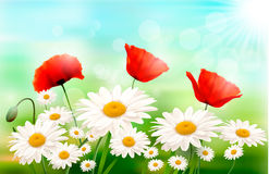 Nature background with summer flowers. And open zipper Vector illustration royalty free illustration