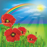 Nature background, summer landscape with poppies Stock Photos