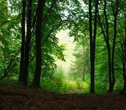 Nature background summer misty green forest Stock Photos