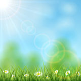 Nature background with Sun and grass Royalty Free Stock Image