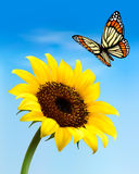 Nature background with sunflower and butterfly. Stock Image