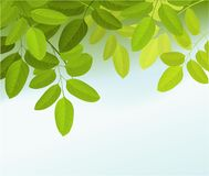 Nature background with tree leaves Royalty Free Stock Image