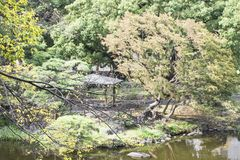 Nature background with view of traditional Japanese garden. In Hibiya public park in Tokyo, Japan, with pond, trees, and water reflections in November royalty free stock images