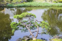 Nature background with view of traditional Japanese garden. In Hibiya public park in Tokyo, Japan, with pond, trees, and water reflections in November royalty free stock photo