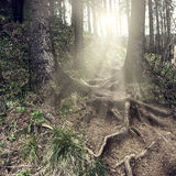 Nature. Background in vintage style Royalty Free Stock Image