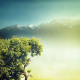 Nature. Background in vintage style Stock Photography