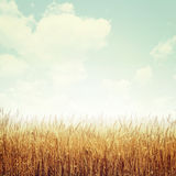 Nature. Background in vintage style Stock Photo