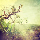 Nature-47. Nature background in vintage style Royalty Free Stock Image
