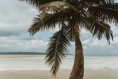 Nature background in vintage style. Palm tree in the foreground against a white beach. The Havelock island in Andaman and Nicobar Islands Stock Images