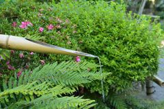 Nature background of water coming out of bamboo pipe at Japanese garden Royalty Free Stock Images